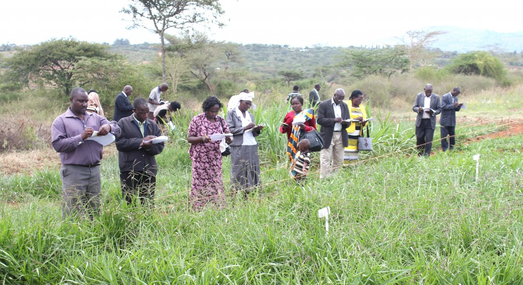 Farmers participatory selection of brachiaria grasses