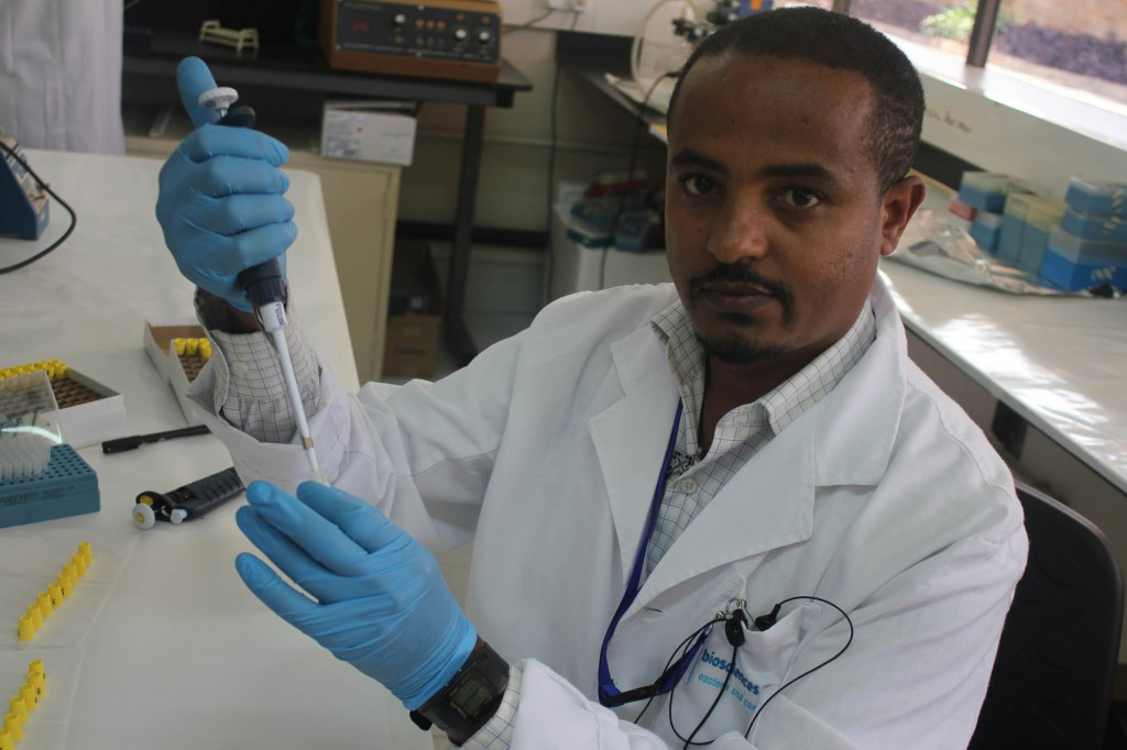 Africa Bioscience Challenge Fund fellow, Getinet Mekuriaw at work at the BecA-ILRI Hub. (photo credit: BecA-ILRI Hub/Marvin Wasonga)
